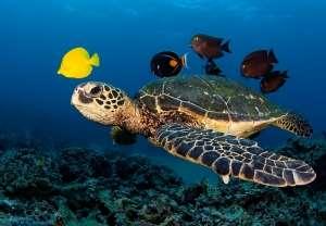 Deniz kaplumbağalarının korunması