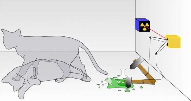 Ölü ya da Diri Kedi Aranıyor! schrodingerin kedisi2 m
