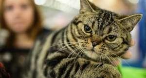 Bilim insanları kanıtladı: Hayvanlarda ne utanma var, ne pişmanlık
