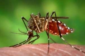 Çin şimdi de sivrisinek fabrikası kurdu