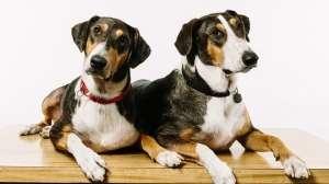 Köpek klonlama dönemi başlıyor