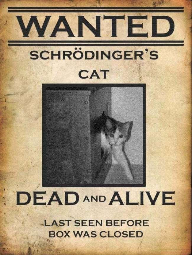 Ölü ya da Diri Kedi Aranıyor! scrodingerin kedisi m