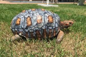 Kaplumbağa Freddy'e 3D Yazıcıyla Yeni Kabuk Yaptılar