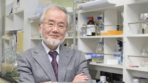 Nobel Tıp Ödülü'nü Japon Ohsumi kazandı