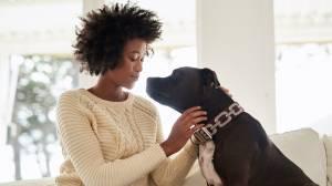 Köpekler Onlarla Konuştuğumuzda Ne Anlıyor?