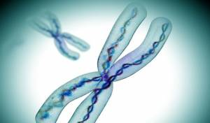 Kromozomun Sadece Yarısı DNA'dan Oluşuyor
