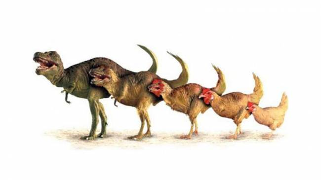 Evrim Oyununda Nasıl Başarılı Olunur?