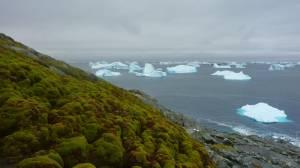 Antarktika İklim Değişikliği İle Yeşilleniyor