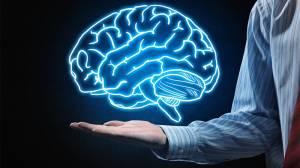 Hayvanlar niçin beynin tek tarafına ayrıcalık tanıyacak şekilde evrimleşti?
