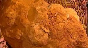 Çin'de 70 Milyon Yıllık Dinozor Yumurtası Fosili Bulundu