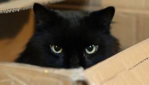 Fizikçiler Schrödinger'in Kedisini Nasıl Çoğaltacaklarını Buldular