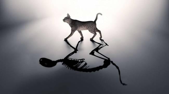 Schrödinger'in Kedisi deneyi kedilere zarar vermeden yapılabilir
